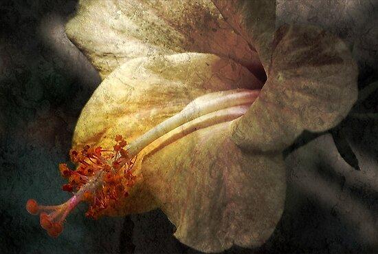 Dusty Beauty by saseoche