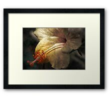 Dusty Beauty Framed Print