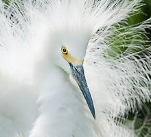 """Bad Hair Day"" or ""Showgirl"" - which title? by John Hartung"