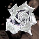 Silver Rose by Igor Shrayer