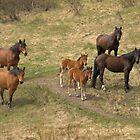 Wild Horses by JamesA1