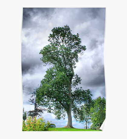 Just For Irene Burdell - Her Favourite Tree Poster