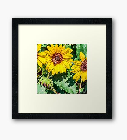 Impressionist Accent Art - Bee on Sunflowers Framed Print