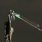Damsel  Dreaming by Rick Playle
