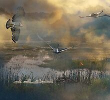 Mysterious Wetlands  by byronbackyard