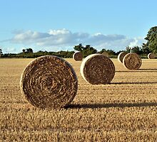 Harvest Time - Barley Bales by Chris Monks