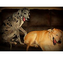 Pair o' Sorry Pups! Photographic Print
