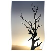 Lake Fyans - Tree Silhouette  2 Poster