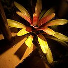 Night bloom in the midst of shadows by Crystal Fobare