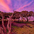 Summer Skies, Torquay by Danka Dear