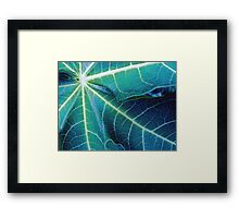 Blue Papaya Framed Print