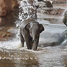Baby African Elephant by AnnDixon