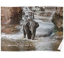 Baby African Elephant Poster