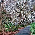 Fallen Trail #1 by James Zickmantel