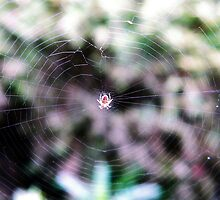 Master Of The Web by Ryne R Slater