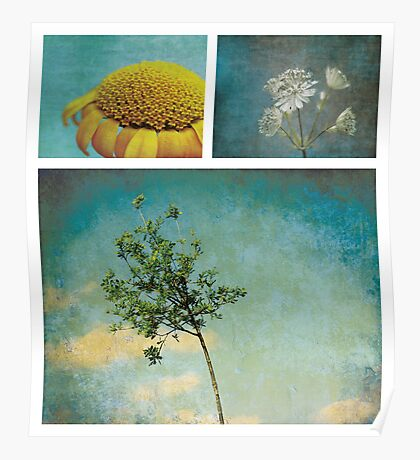Collection ~ Nature in colour Poster