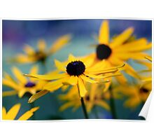Pretty Black Eyed Susan Flowers Photograph Poster