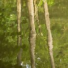 Reflections, pond, Ashtead Park, II by physiognomic