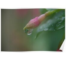 Weeping Bud Poster