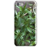 Tarragon iPhone Case/Skin