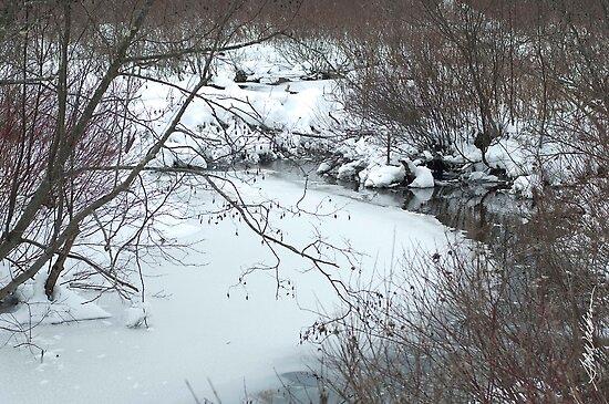 Winter Freeze by Susan R. Wacker