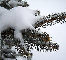 Snow on The Needles by debbiedoda