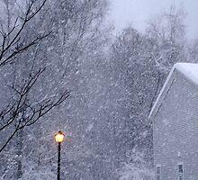 2011 Blizzard in Connecticut by Cathy Amendola