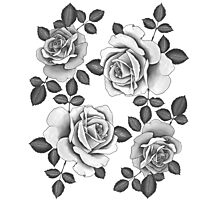 White Realistic Roses Photographic Print