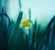 lost in the grass by Shirley Bittner