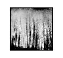 Arbres Photographic Print