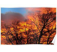 Burning Bushes Poster