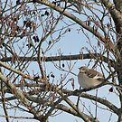 Momma Mockingbird by katpartridge