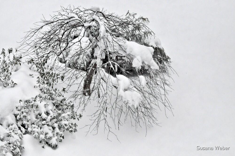 Shaggy Snow Dog by Susana Weber