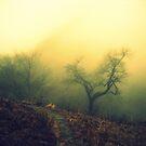 Run and hide - Cerro Cámara - Salta - Argentina by EllaUnread