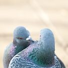Pigeon moment by mickeyb