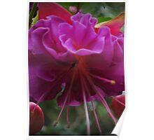 Blooming Pretty Purple Flower Poster