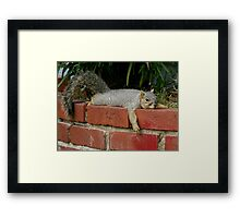 Just Chillin' Framed Print