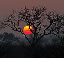Sunset At Londolozi by Michael  Moss