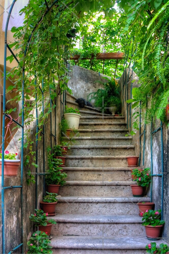 Potted plants and a dog on the steps by Tom Gomez