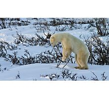 Yoga Bear start standing Photographic Print