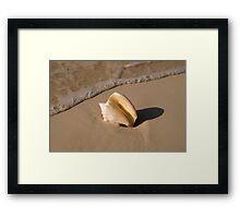 Seashell, Rose Island, Bahamas Framed Print