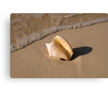 Seashell, Rose Island, Bahamas Canvas Print