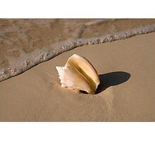 Seashell, Rose Island, Bahamas Photographic Print