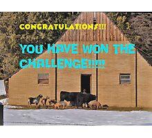 Barnyard Winners banner Photographic Print