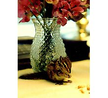 Chipmunk Heaven Photographic Print