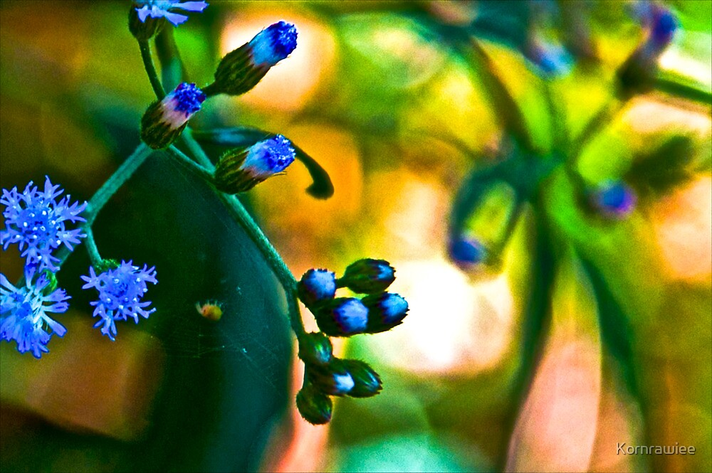 Blue Grass: On featured: Nikon-d90-users Group & Weekend-photographer Group by Kornrawiee