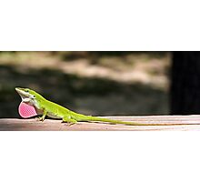 Female Anole Wanted Photographic Print