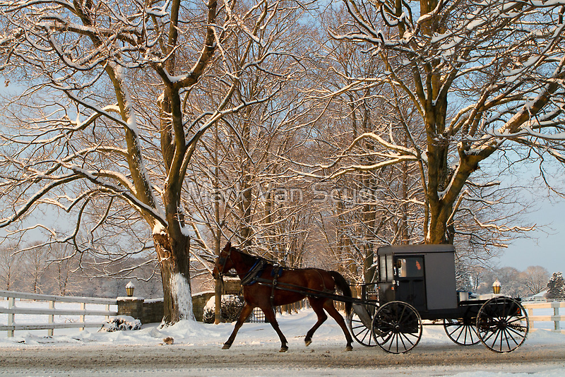 Horse and Buggy on a Wintery Morning by Mark Van Scyoc