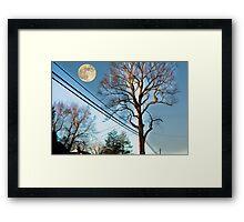 Tree on Warren Road Framed Print