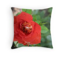Glossing over the details Throw Pillow